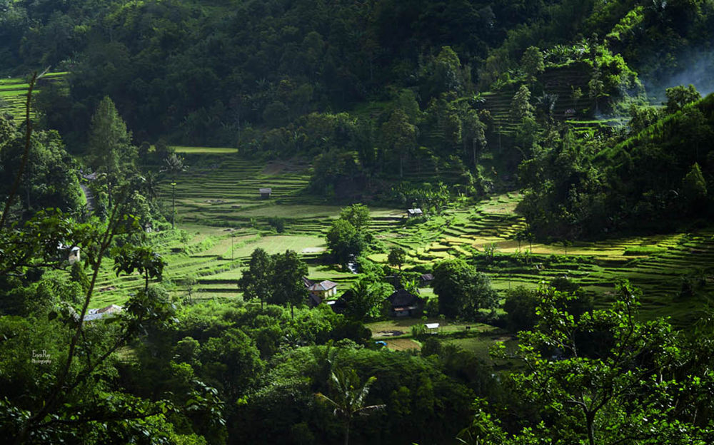 The Paddy Field by erwinray2912