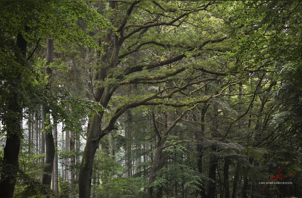 Prime Woods by Lars Korb