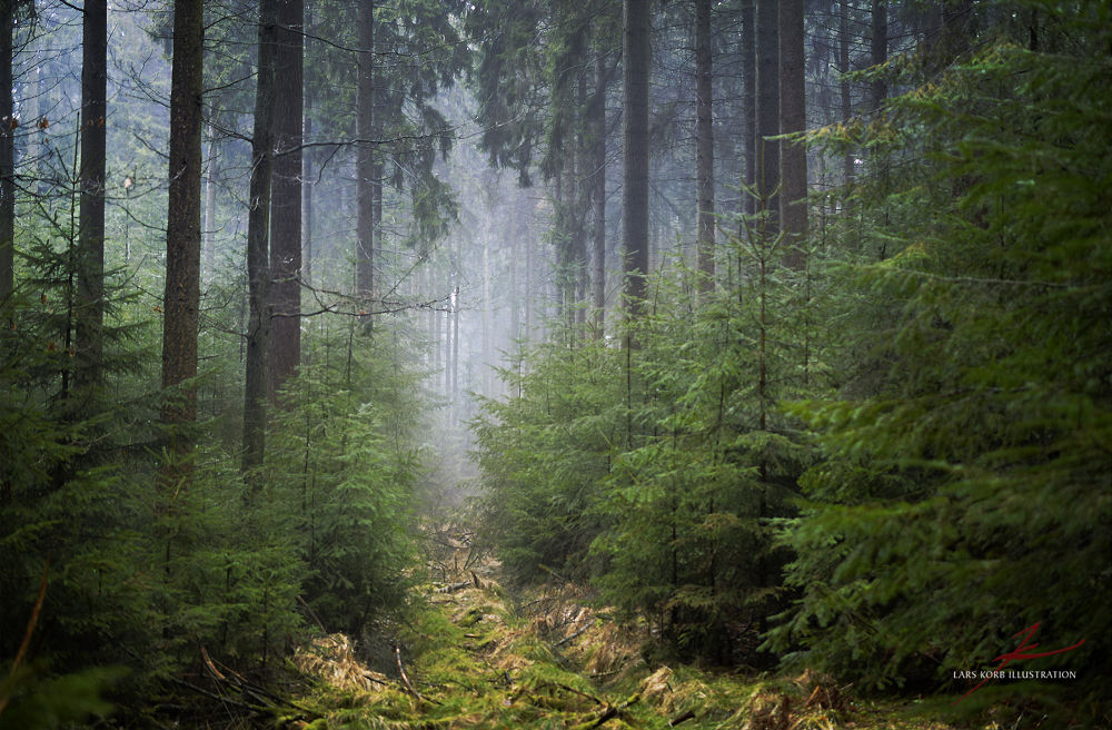 Photo in Nature #landscape #woods #forest #nature #wildlife #wilderness #conifers #spruces #douglas firs #path #trail #moss #growth #mist #fog #humid