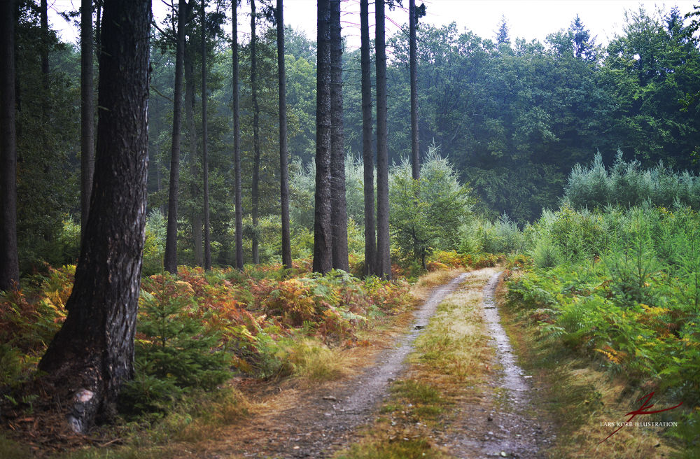 Photo in Nature #forest #woods #seasons #autumn #fall #trail #path #ferns #color #trees #conifers #nature #landscapes