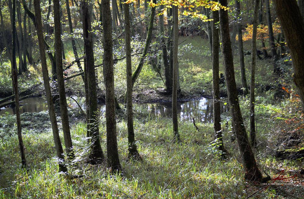 Wetland by Lars Korb