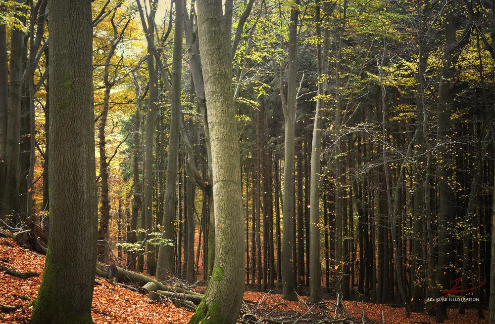 Burning Woods by Lars Korb