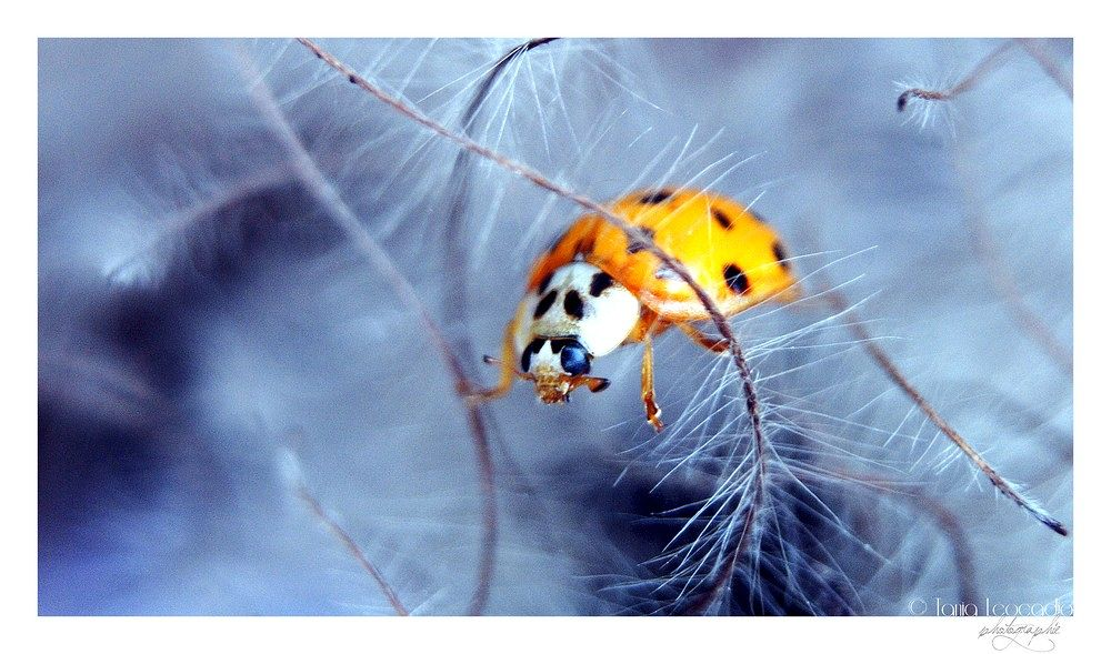 Ladybird by Tania Léocadio