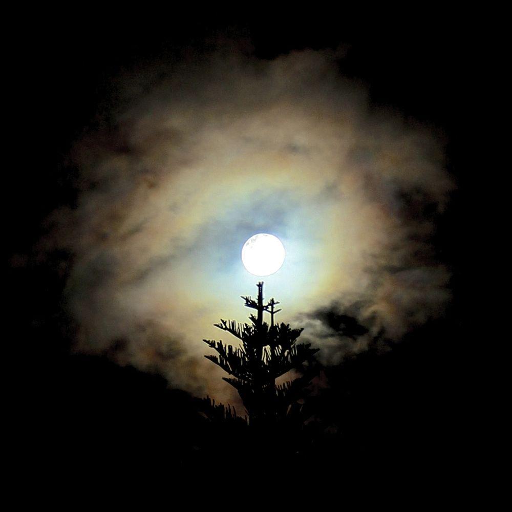 IN BLOOM - SUPER MOON by PAUL (PaddyPoet) BMJ LOFTUS