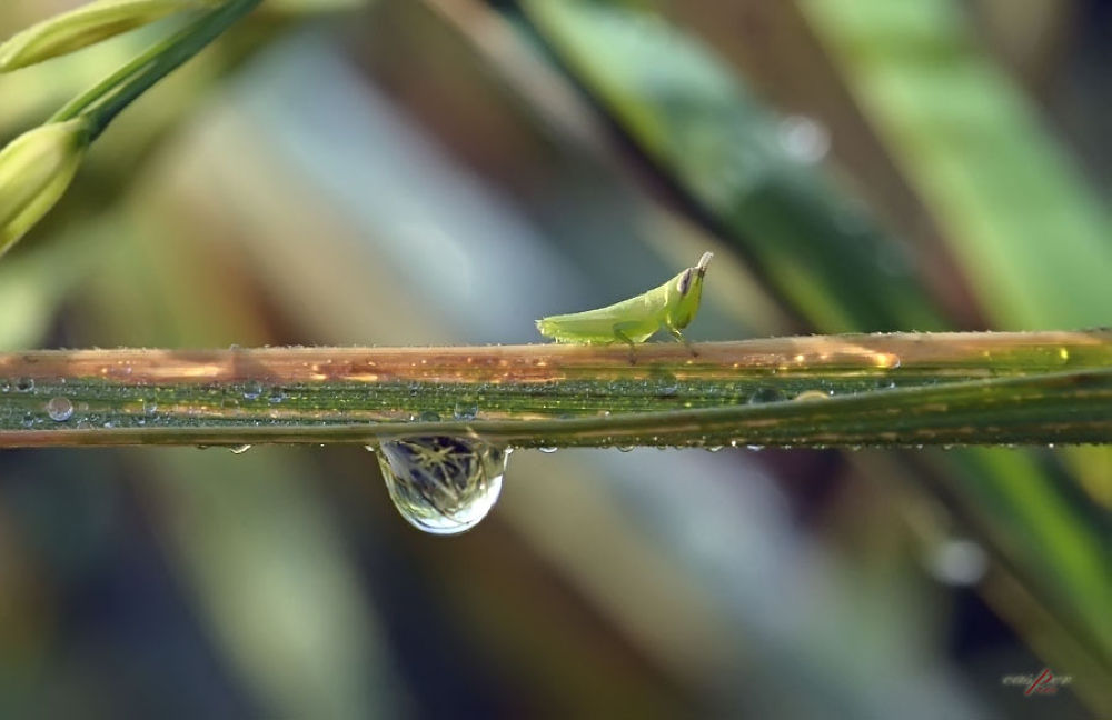 Photo in Random #macro #nature #animal #dew #grasshopper