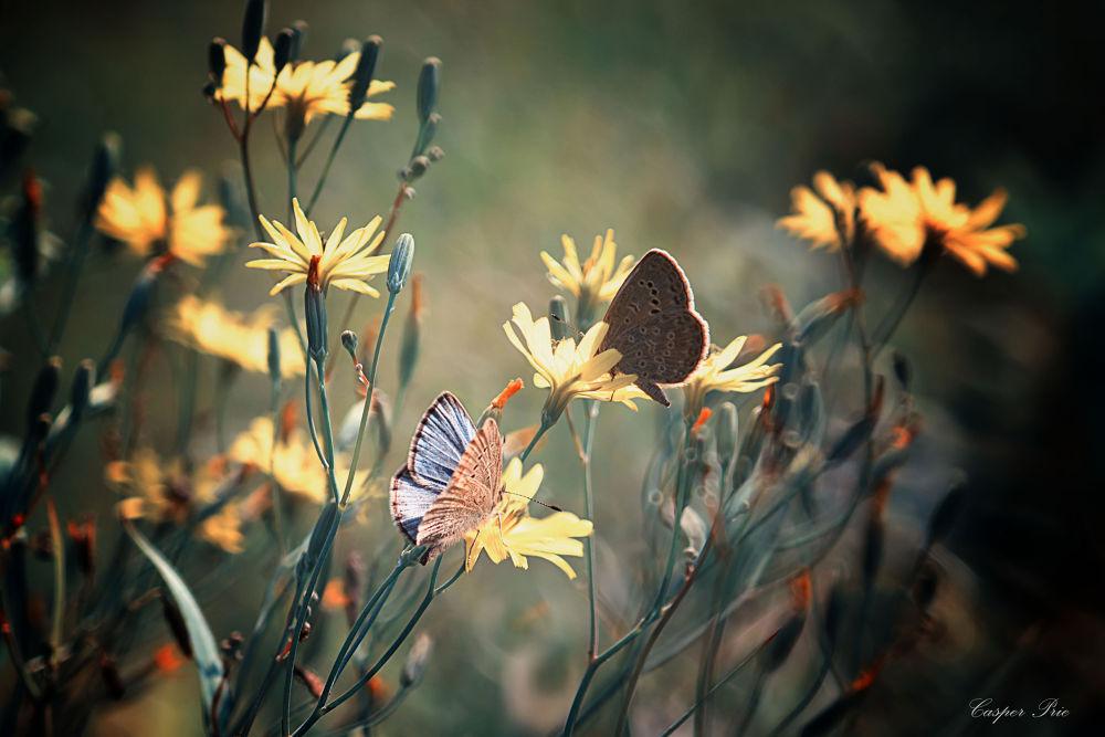 Photo in Macro #butterfly