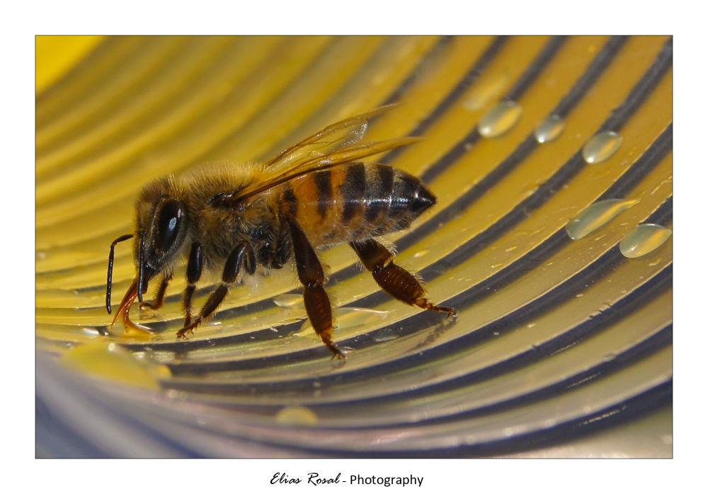 Doce mel de um copo de refrigerante. by eliasrosal