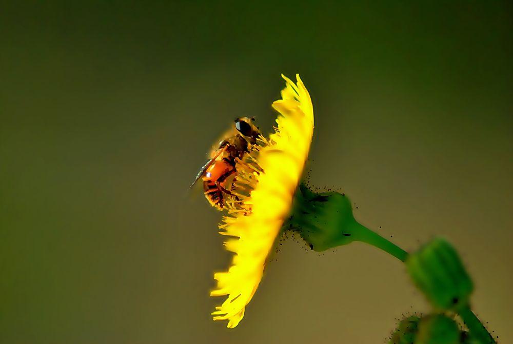 Arı by sonmez