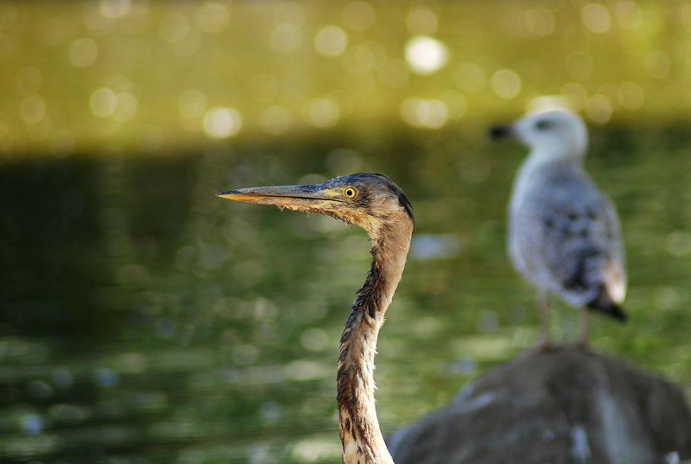 Photo in Random #ornitho- #lake #bird #mere