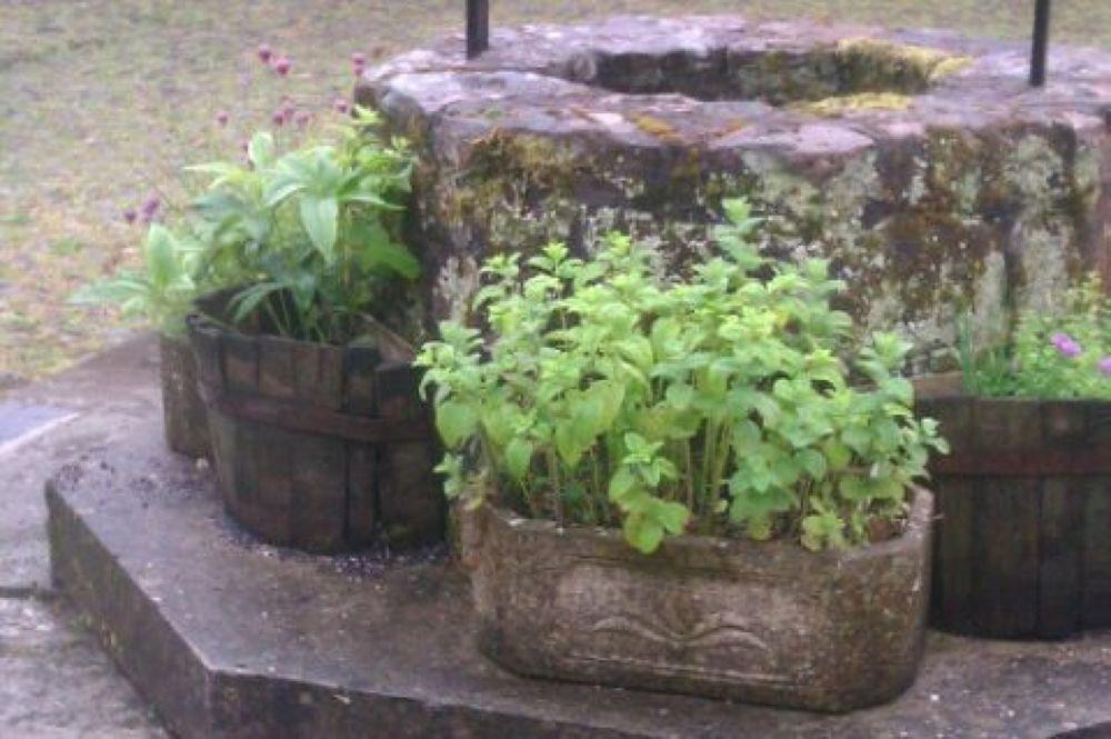 herbs by Phaedra