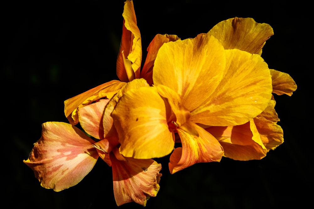/// Flower \\\ by pabloavila100046