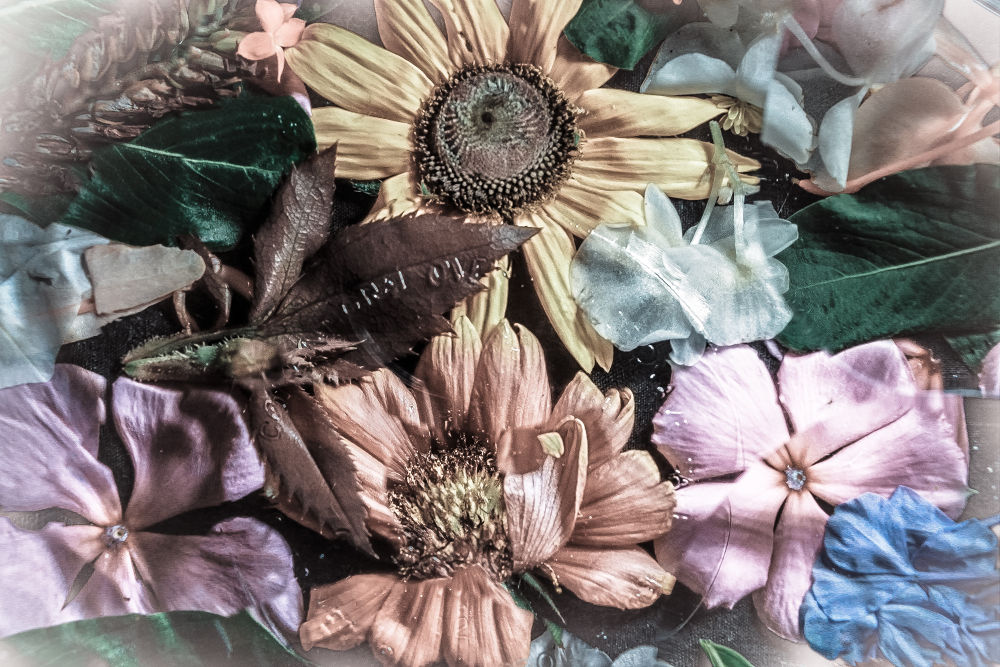 /// Composition of dry flowers \\\ by pabloavila100046