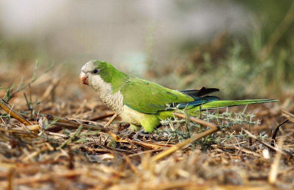 Photo in Animal #bird #nature #wildlife