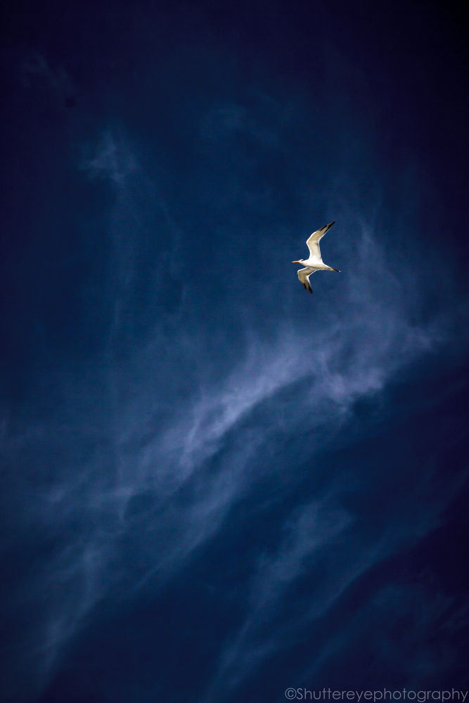 Photo in Nature #sky #fly