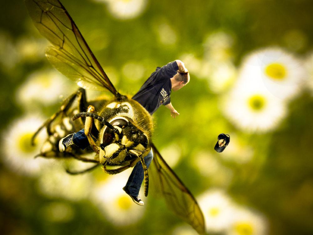 Photo in Portrait #small #hornet #wasp #photo manipulation #self portrait