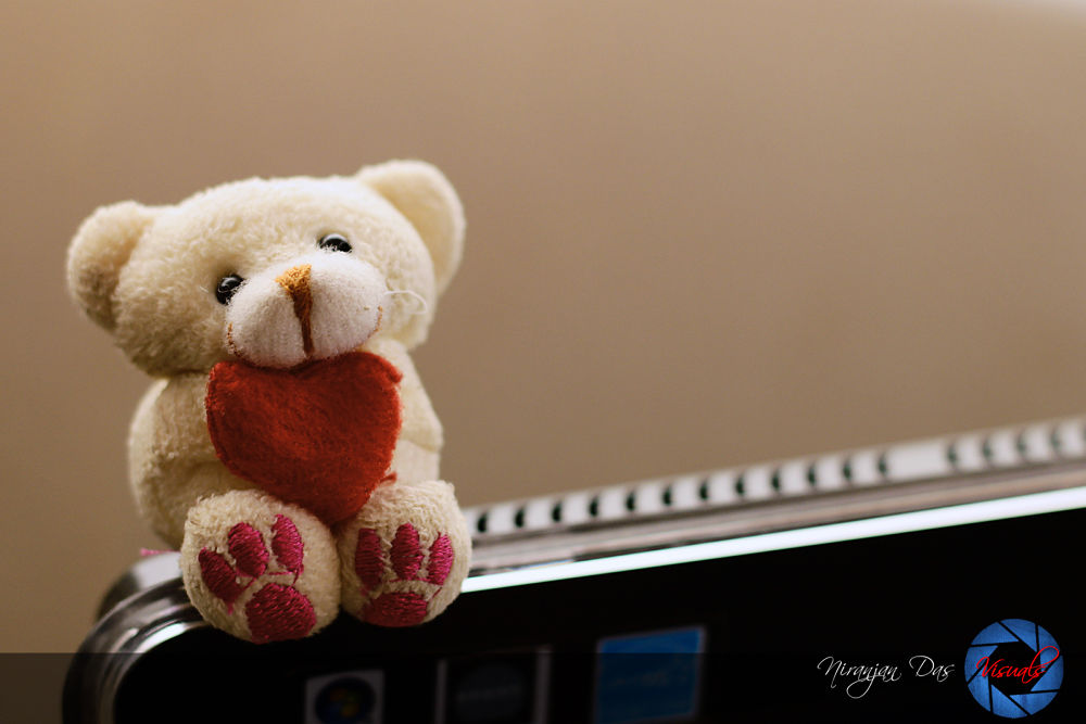 teddy by niranjan Das