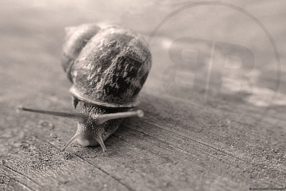 Snail by Bam Boostick