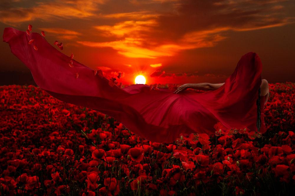 Photo in Fine Art #silk #red #poppy #fields #woman #sunset