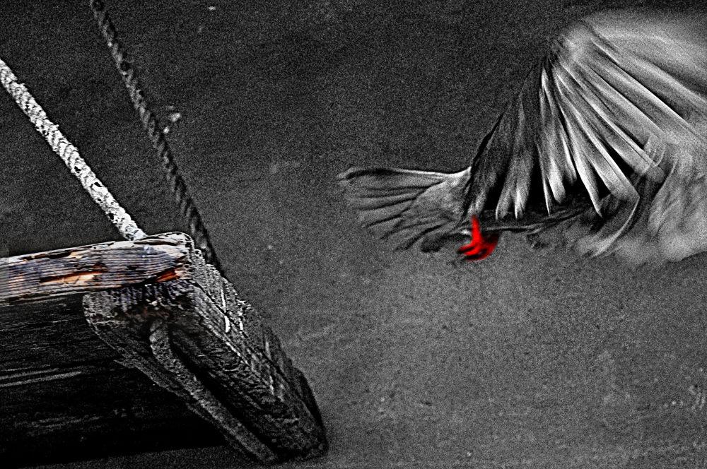 FLY by moududulalam