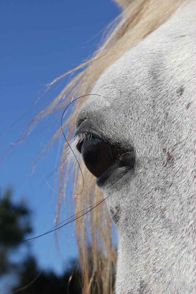 Photo in Animal #horse #eye #blue sky #horse whiskers