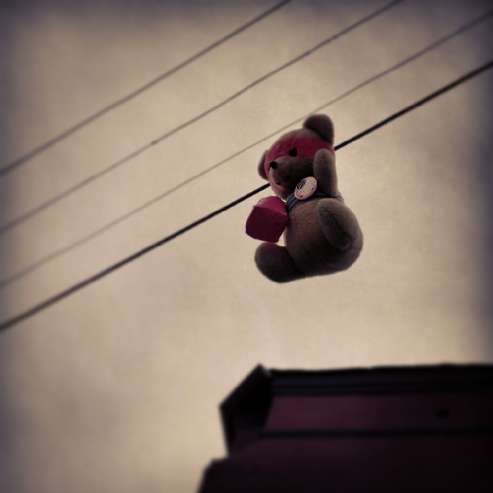 Bear On a Wire by impartialjoker
