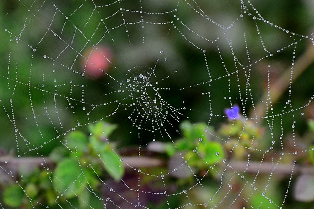web by mahendravictor