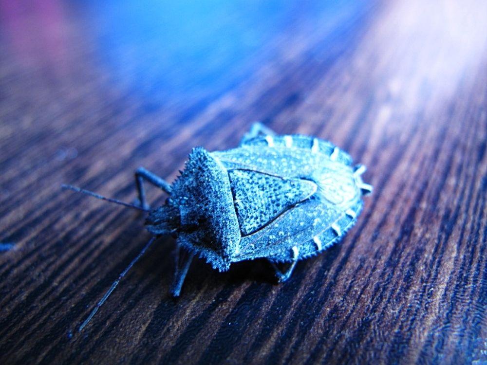 ölmüş böcek çekiciliği by beyzahatun