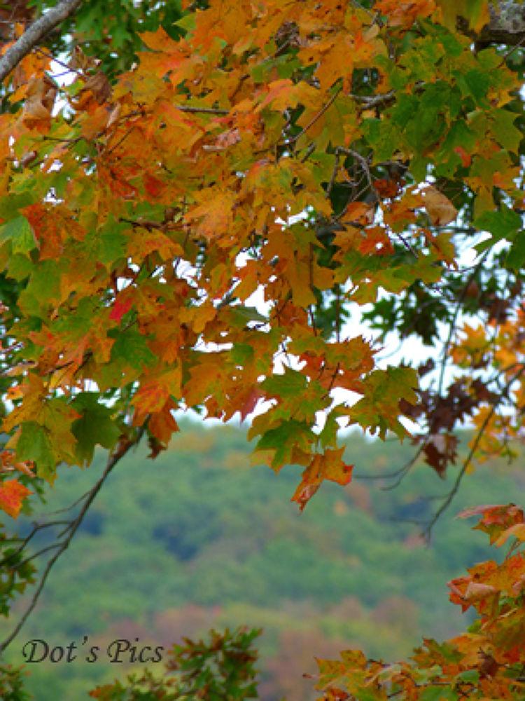 Fall in Missouri by dotfischer