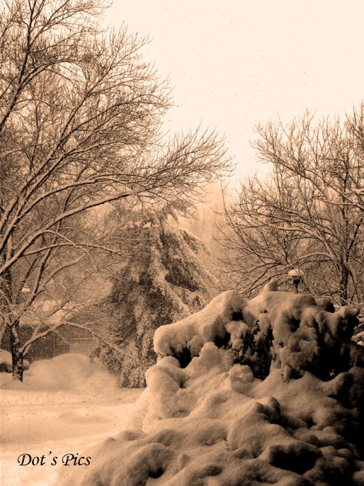 Winter P1280271deFB by dotfischer