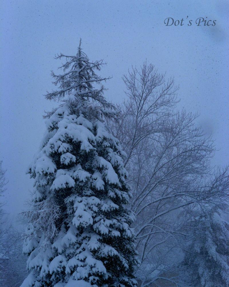 Winter P1280264bFB by dotfischer