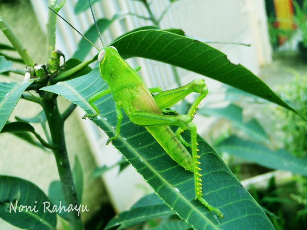 beauty one of green by Noni Rahayu
