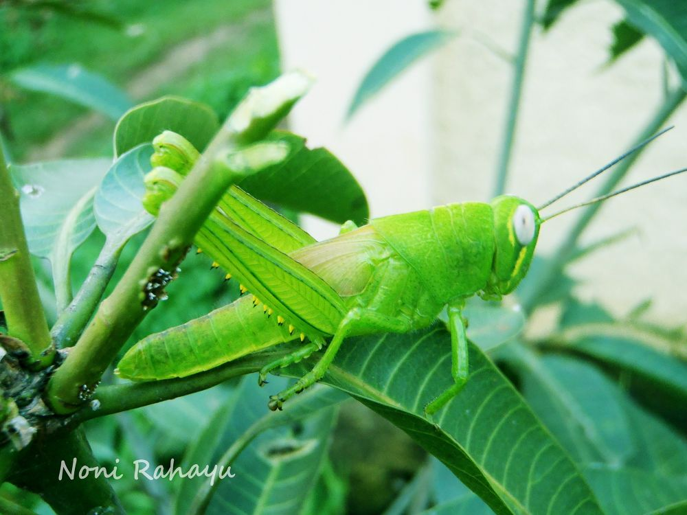 green from the other side by Noni Rahayu