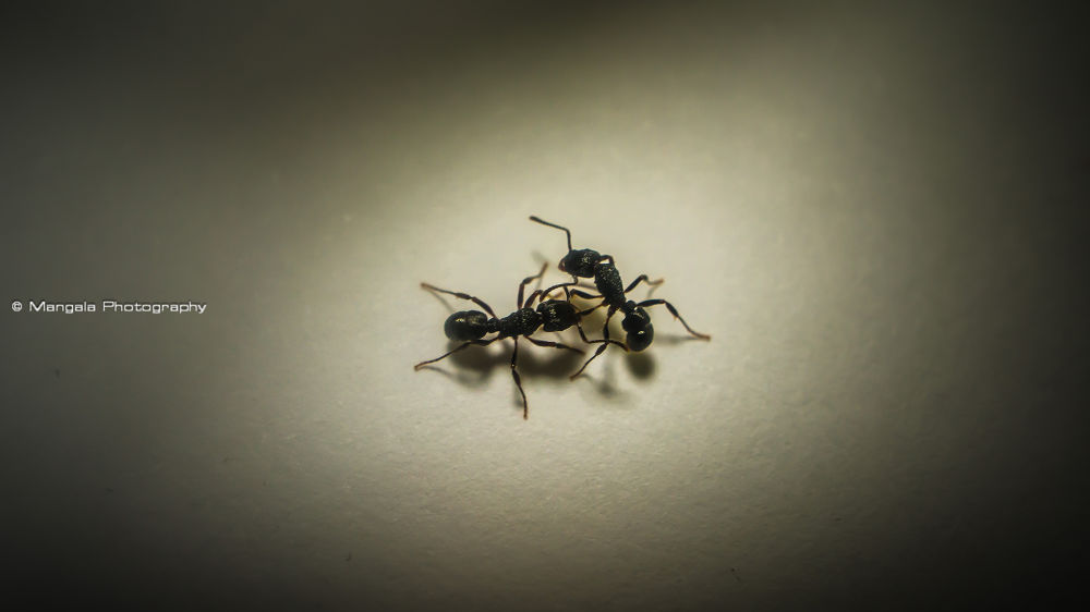 The Ant Dance by R.Mangala Photography