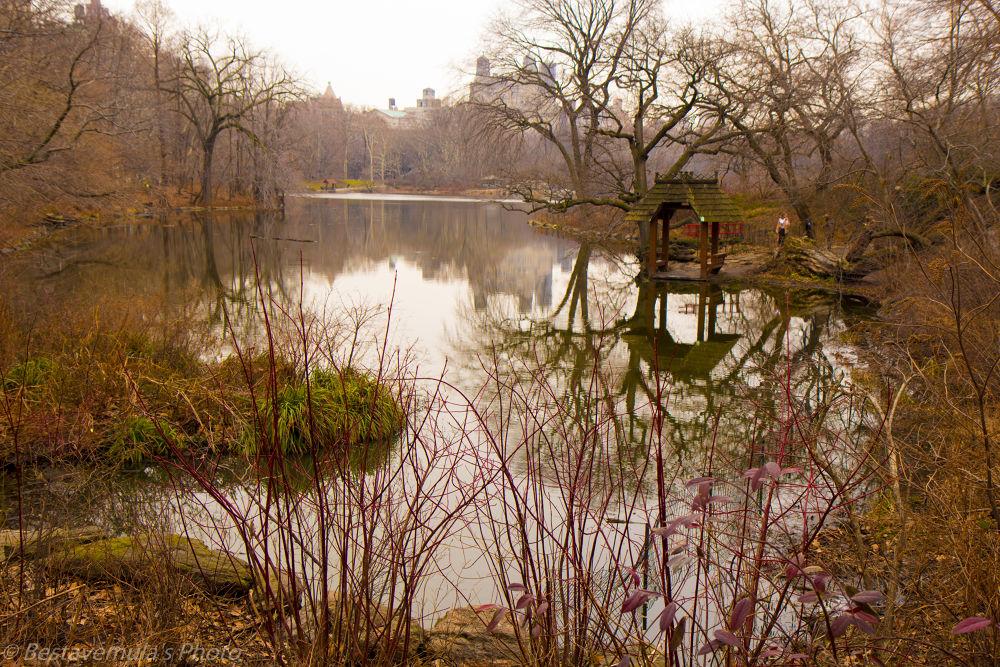 Photo in Landscape #park #nature