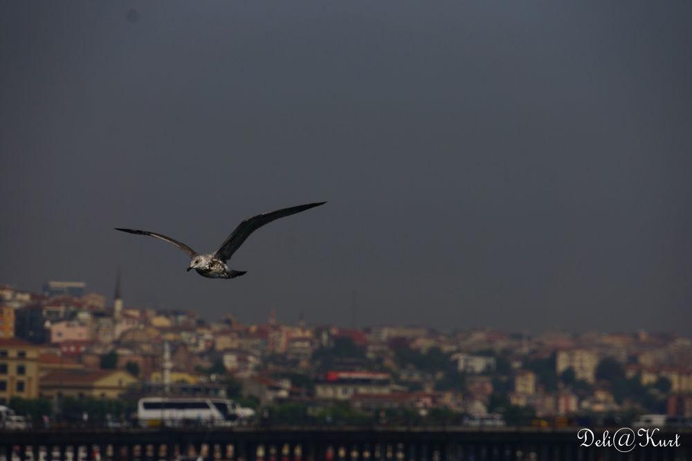 Ah İSTANBUL by Zeki Alkanat