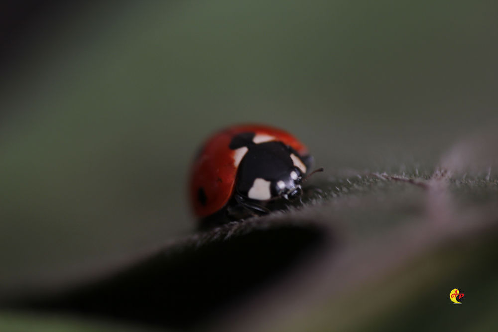 My Ladybird by aliz