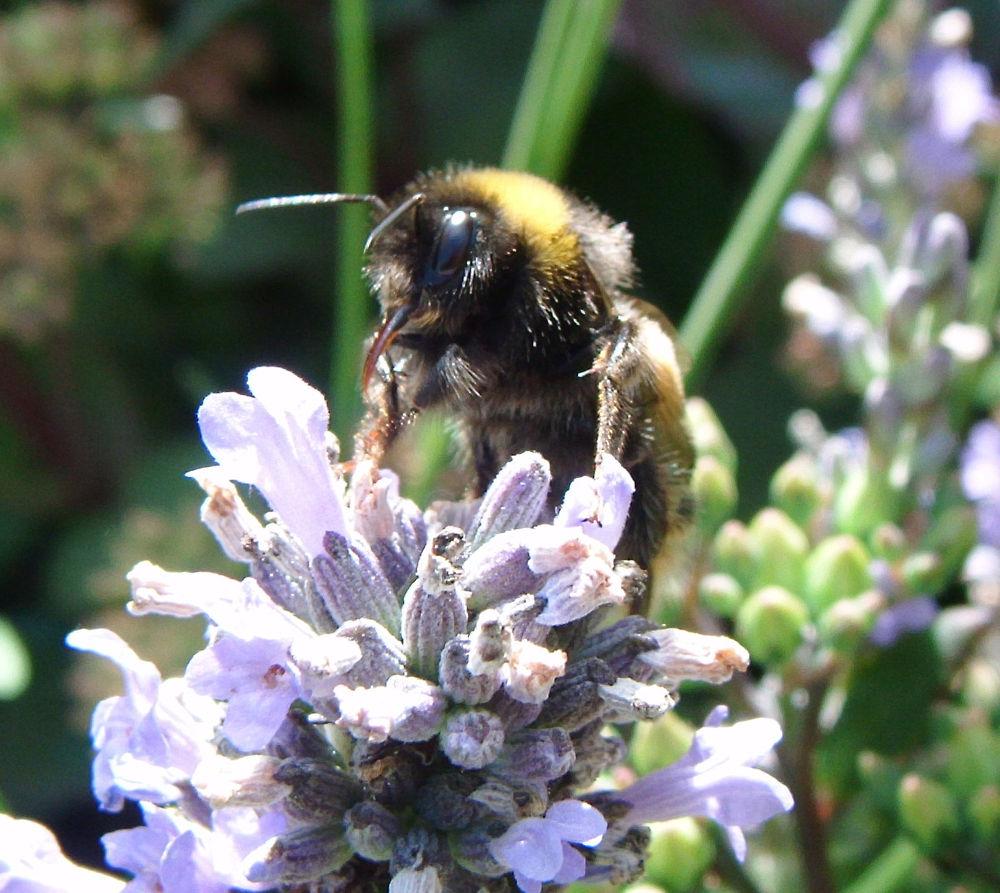 Beaky bee by didibergman3