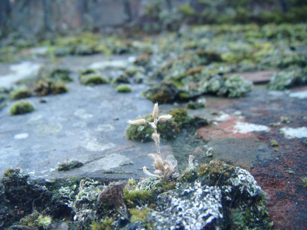 Moss by didibergman3