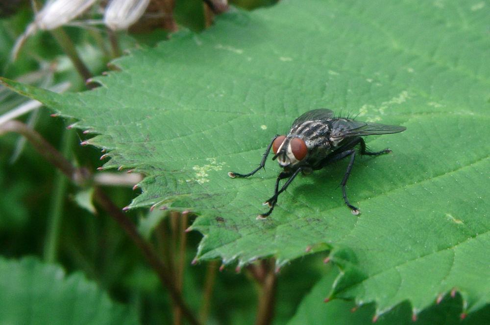 Horsefly by didibergman3