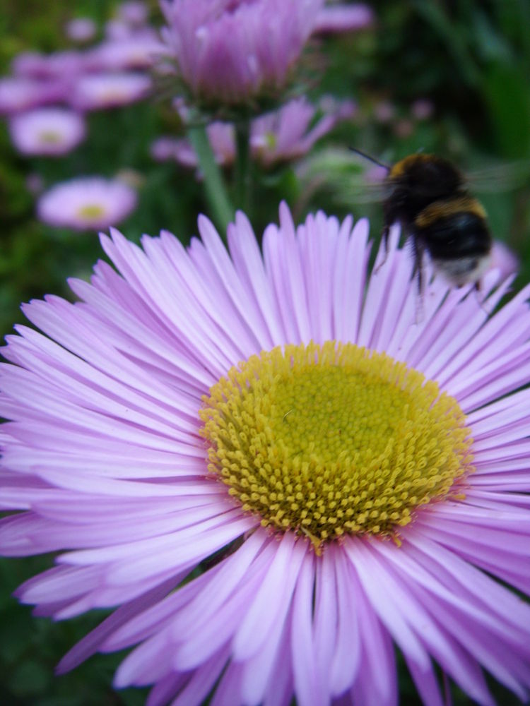 Flying bee  by didibergman3