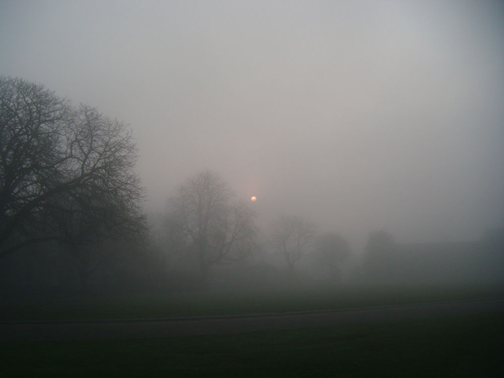Sunrise and trees, Castle gardens March 2014 by didibergman3