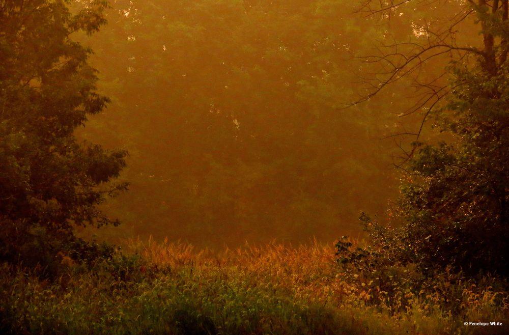 Golden glow by pennieawhite