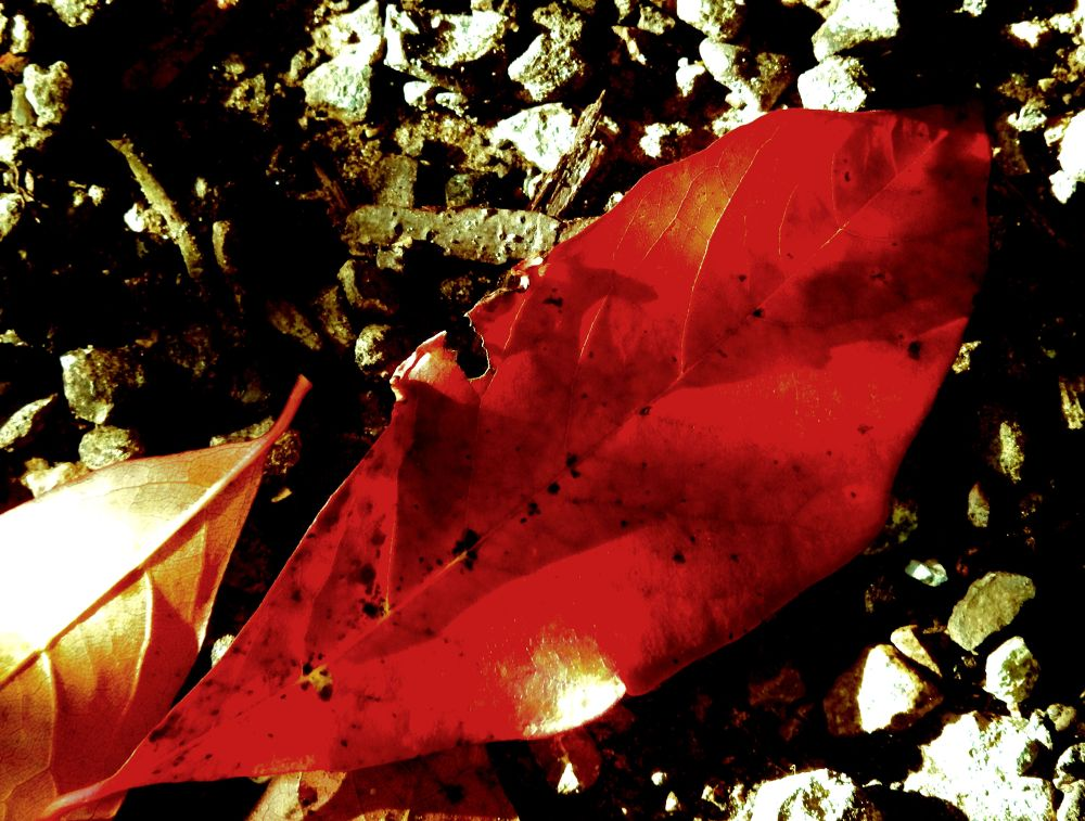 Photo in Macro #leaf #macro #hdr