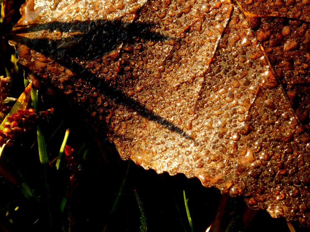 Dewy leaf by pennieawhite