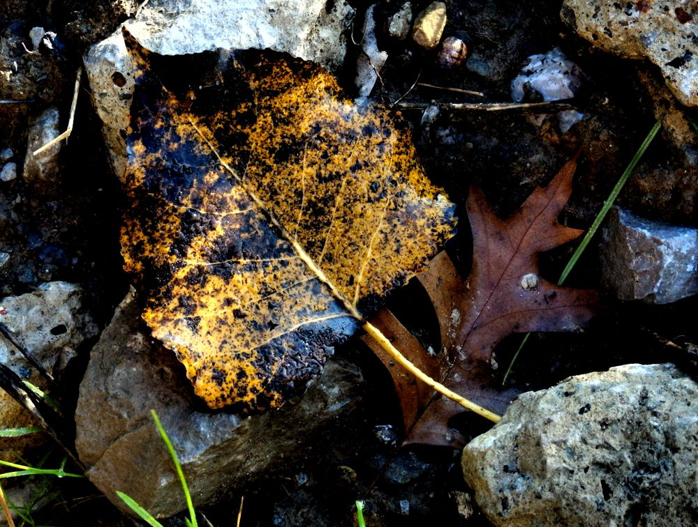 Like a rock by pennieawhite