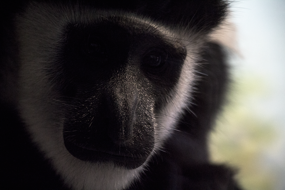 Emotional Monkey by Matthew Willsone