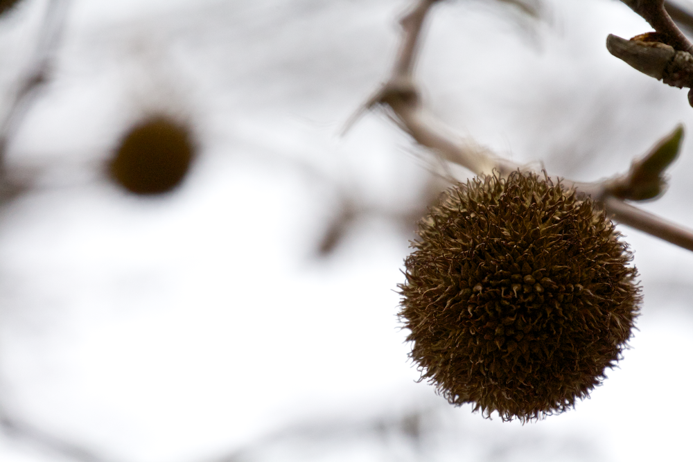 Winter by Matthew Willsone