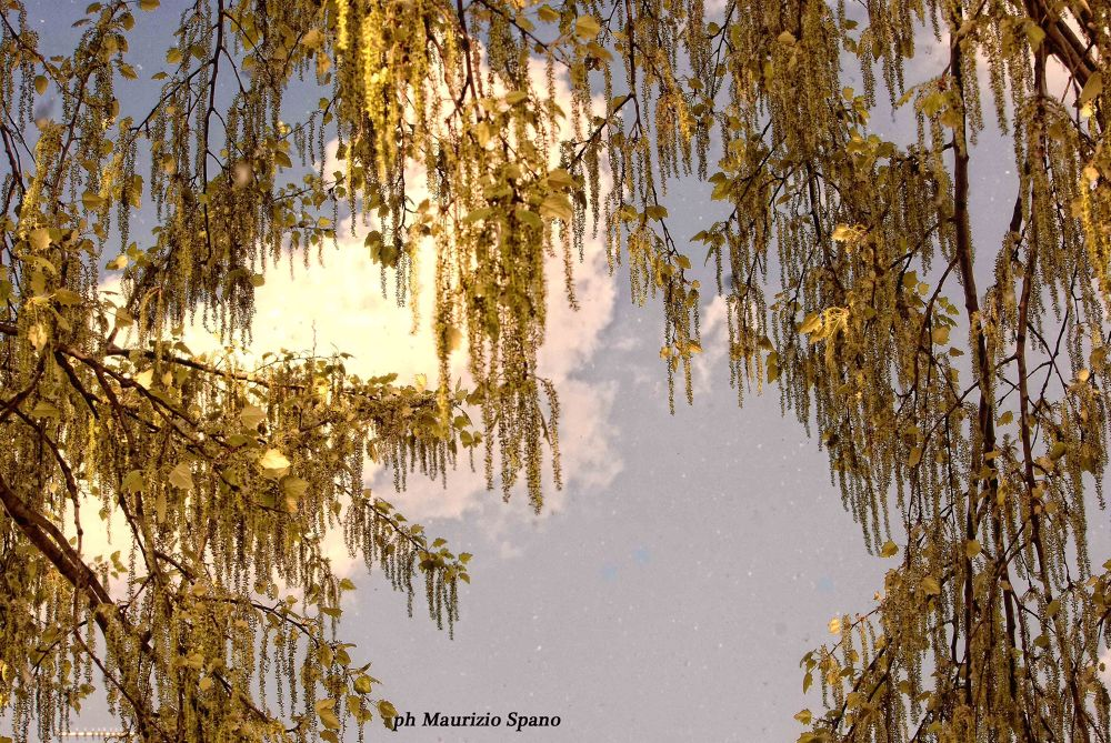 rain of gold by spano60