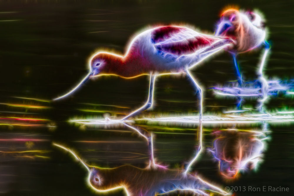 Electric Avocets by RonsPhotoArt