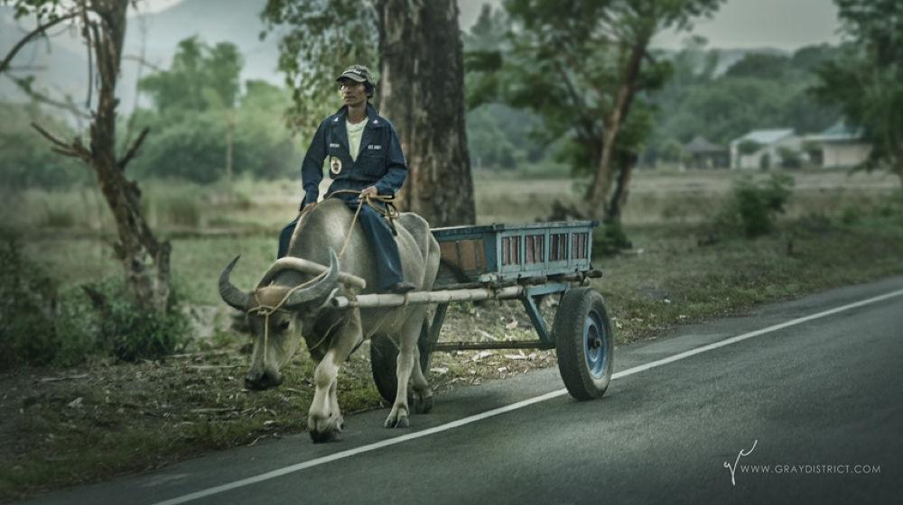 Photo in Rural #rural #travel #carabao #farmer #vouyage #work